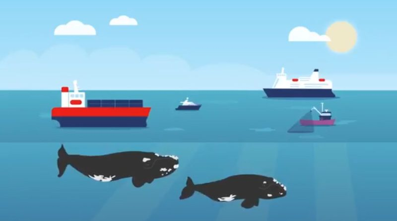 Oграничение на скоростта в залива Св. Лаврентий