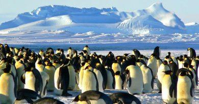 Български географски наименования в Антарктика