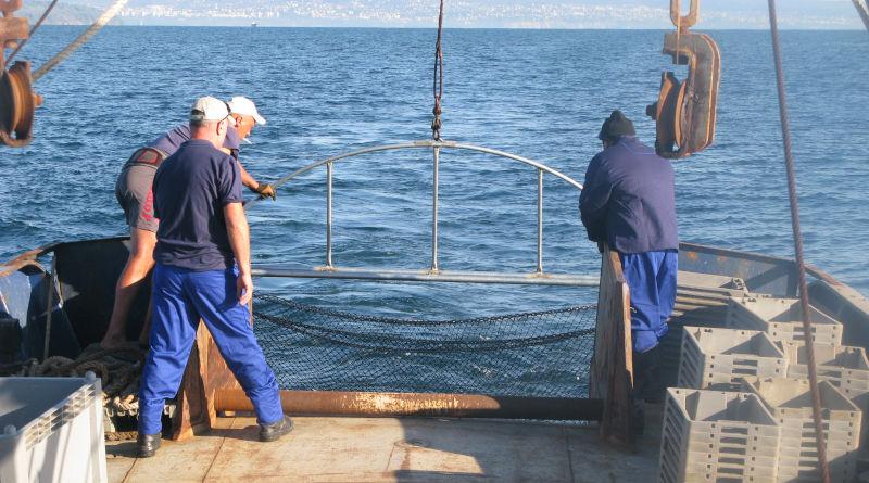 Научно изследване за състоянието на запаса от рапан в Черно море